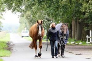 Bisher können die Reiter mit ihren Pferden den Wirtschaftsweg an der Buchholzer Straße noch unbehelligt nutzen. Doch damit könnte Schluss sein, wenn der Weg für die Erschließung eines Gewerbegebietes genutzt wird.