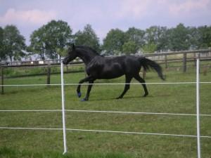 mein Pferd Darlings-Destiny hat Seine Arbeit toll gemacht